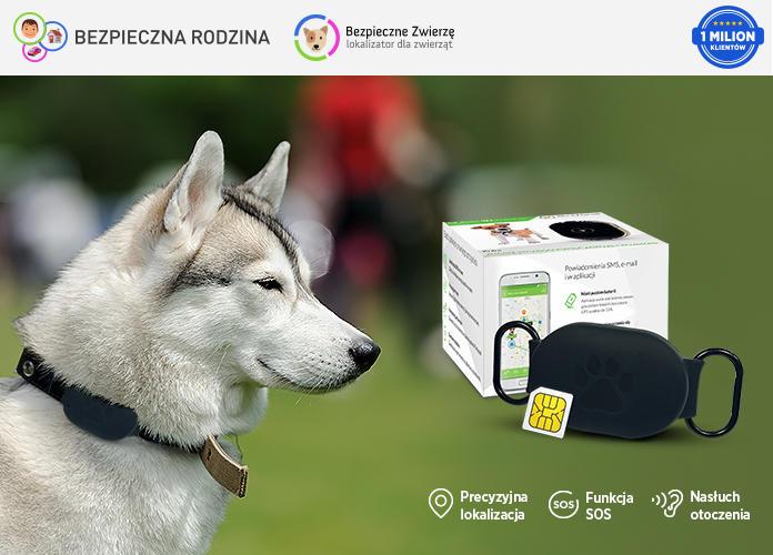 lokalizator gps dla psa z pudełkiem oraz pies rasy husky