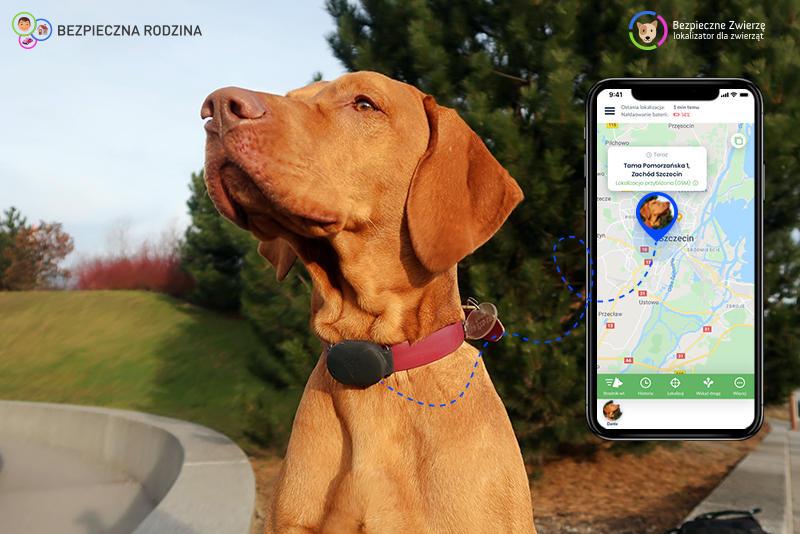 aplikacja bezpieczne zwierzę z psem i lokalizatorem gps