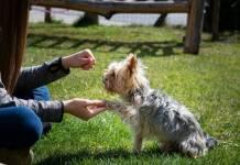 jak nauczyć psa nowych komend